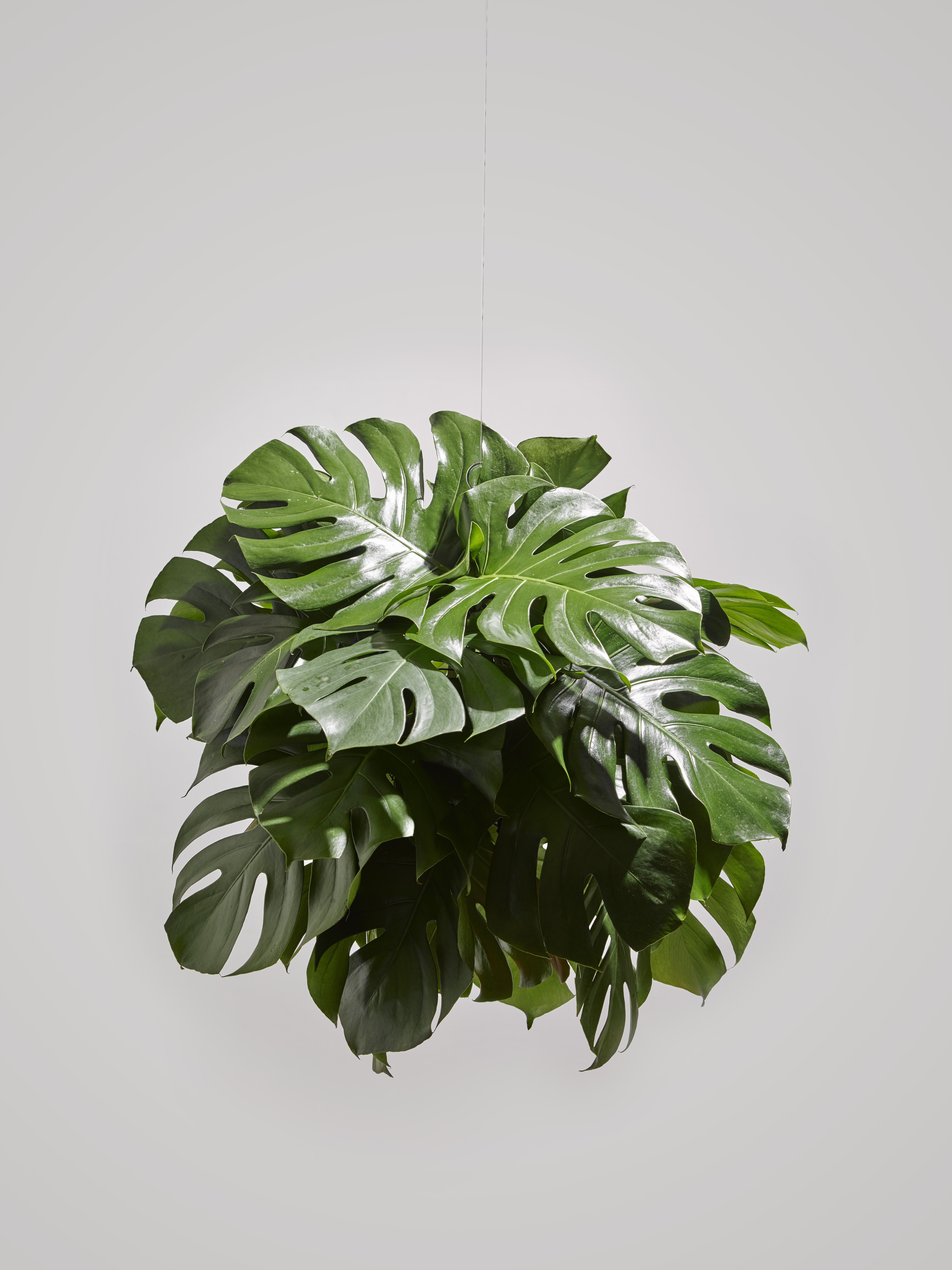 How To Make Monstera Chandeliers Broadsheet