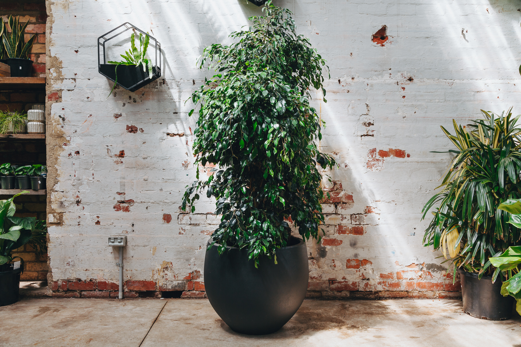 Indoor plants that purify the air plus the pots to put for Tall indoor plants low maintenance